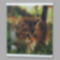 Плакаты на ткани (1).jpg