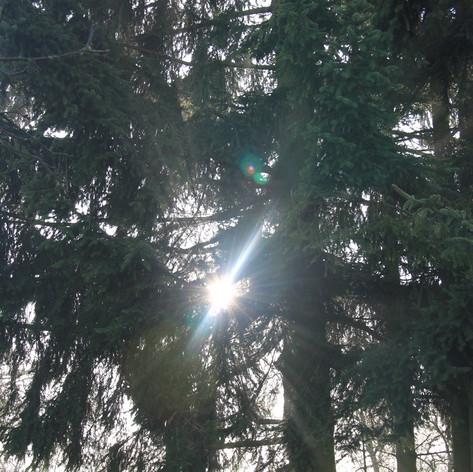 slunce ve větvích stromů