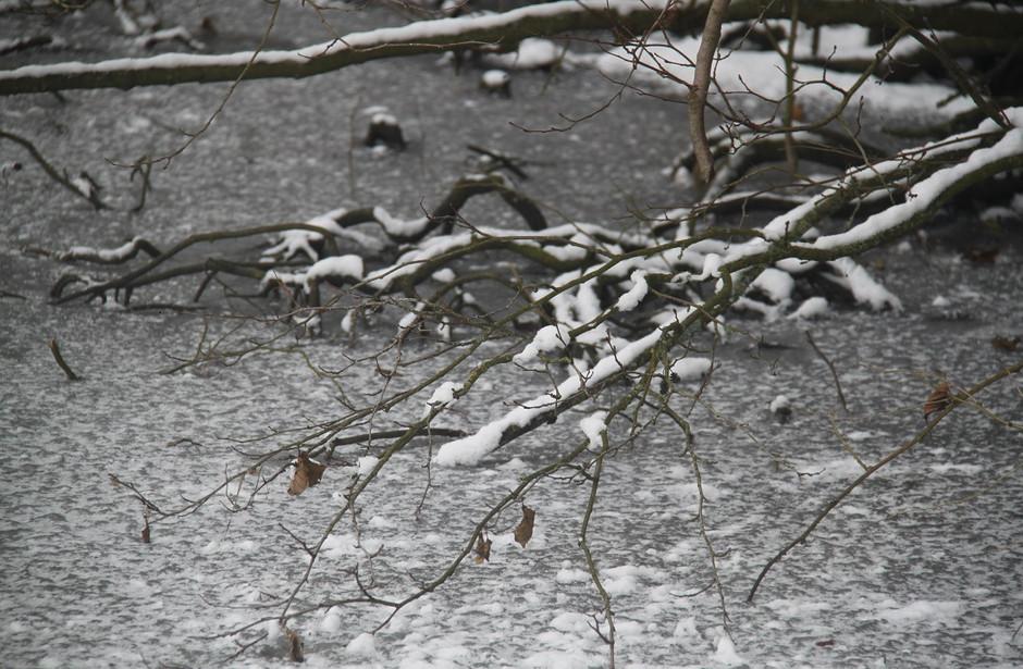 větve v ledu