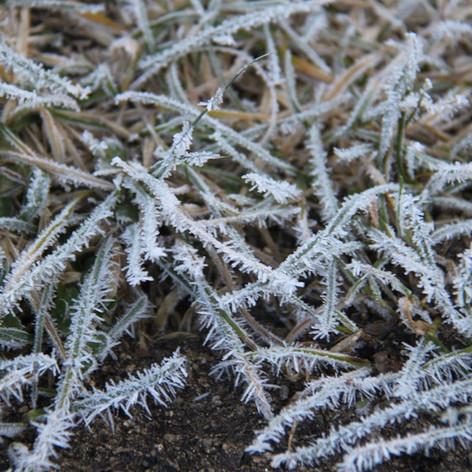 zmrzlá tráva