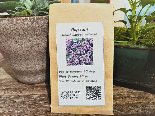 Seeds: Alyssum – Royal Carpet (150 Seeds)