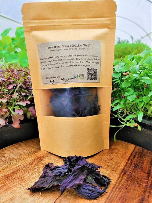 Tea: Sun-dried Shiso PERILLA 'Red'