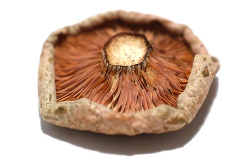 Dried Pine Mushroom - Lactarius Deliciosus - 20g