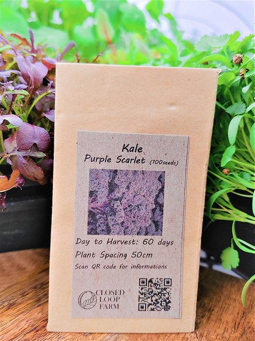 Seeds: Kale - Scarlet  (100 seeds)