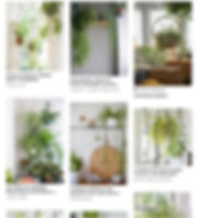 spider plant\.jpg