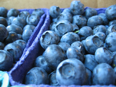 Blueberries May Effectively Treat PTSD