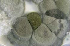 Mold Removal Toronto Oakville Guelph