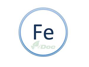 FE_iDOC.png