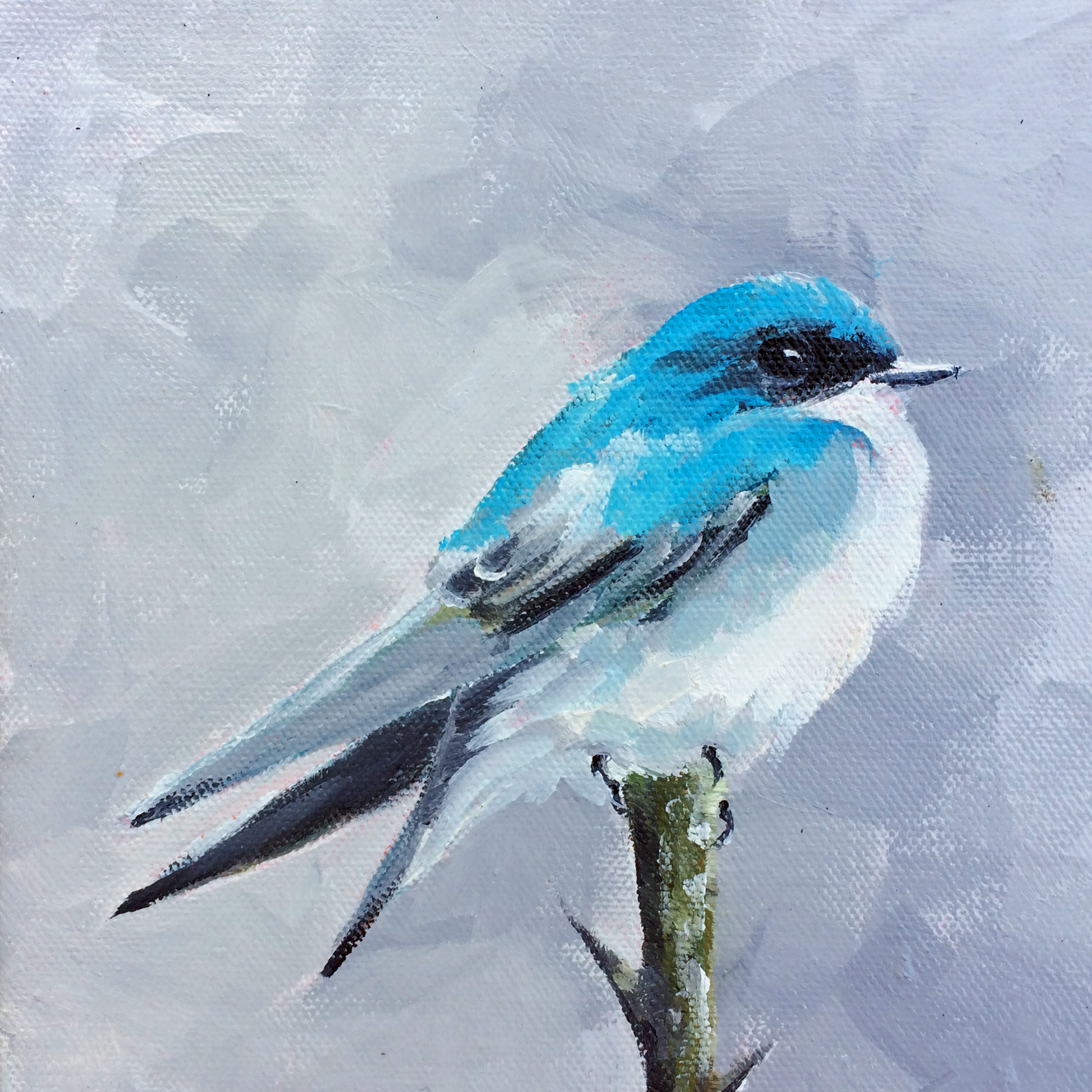 Tree Swallow 2018