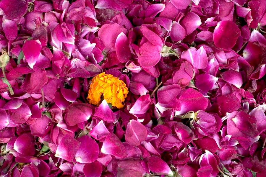 Flowers, Colorful, New Delhi Flower Market