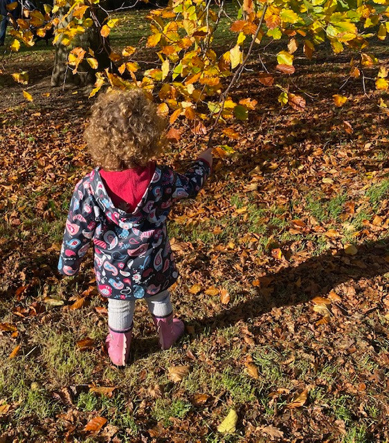 Toddler looking at autumn leaves