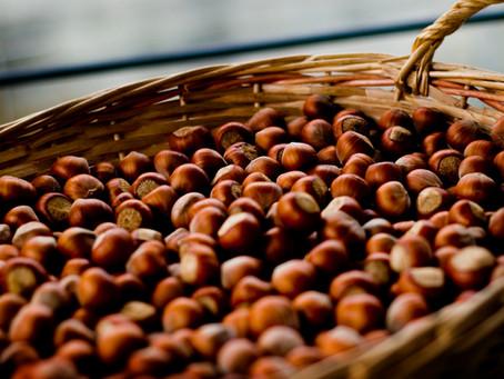 """Misto Chiavari"" Hazelnut production"