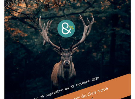 Sorties Brame du cerf en septembre-Octobre 2020