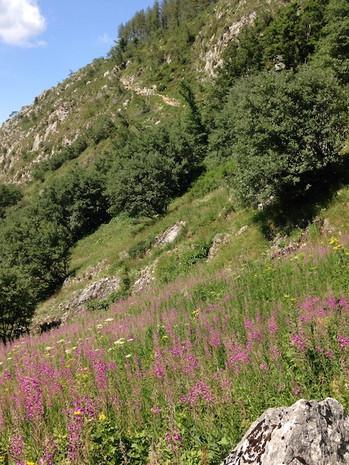 paysage_hike.JPG