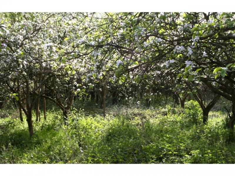 Warneford Meadow