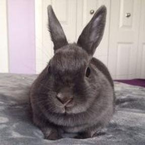 alexs bunny.jpeg