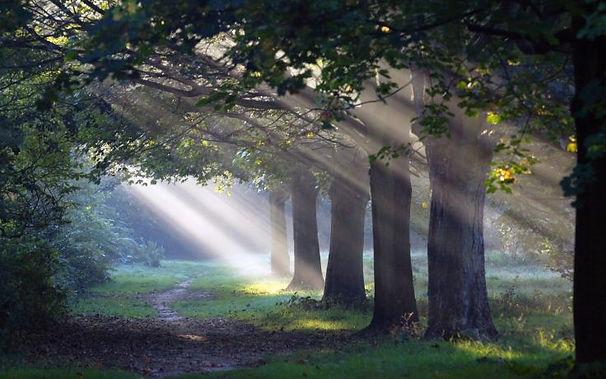 sunlight-through-trees-forest-path.jpg