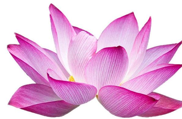lotus2%20(2)_edited.jpg