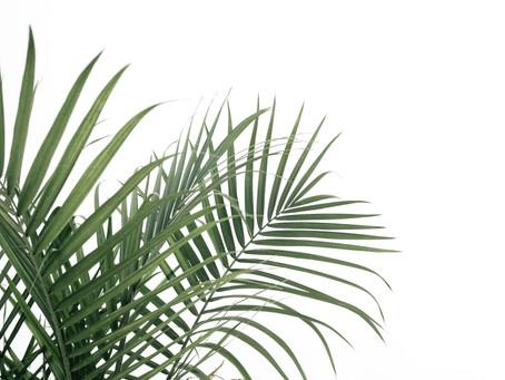 Dale vida a tu casa con plantas naturales sin complicaciones