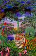 Animals - International Rainforest