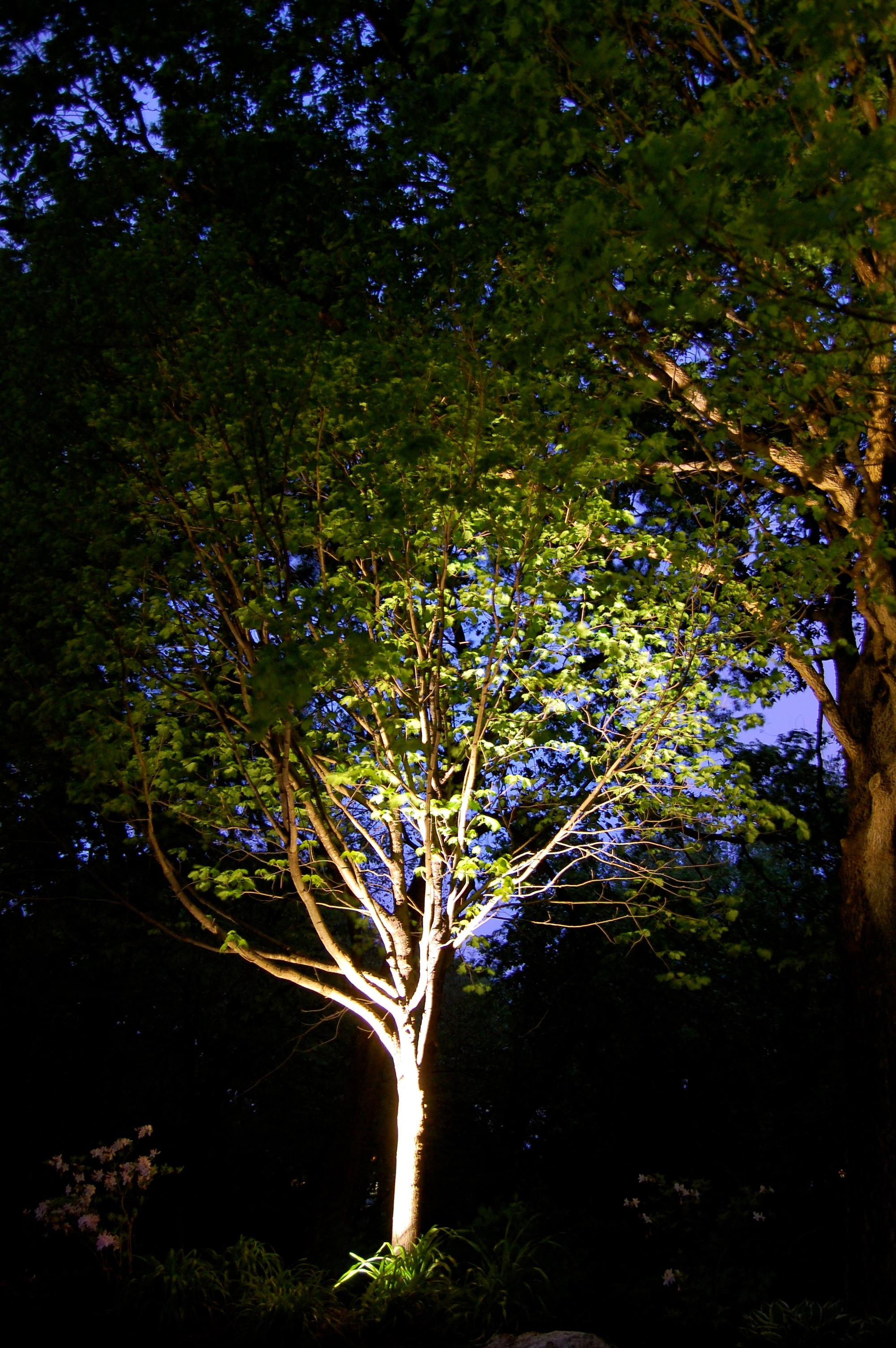 Omaha landscape lighting