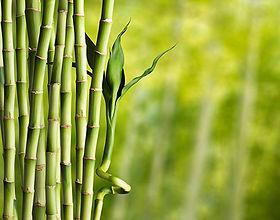 bamboo-499x392.jpg