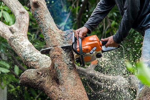 FWPCOT2236 - Fall Trees Manually (Basic)