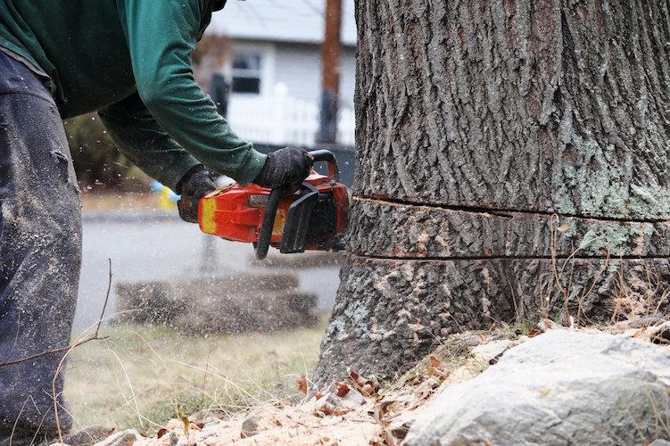 FWPFGM3213 - Fall Trees Manually (Advanc