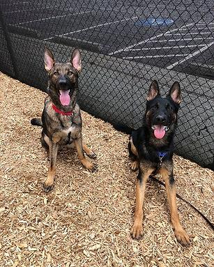 Sarge and Ozzie.jpg