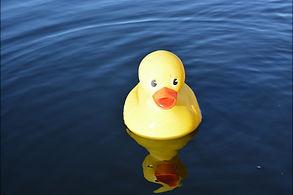 Rubber Duck Race.jpeg