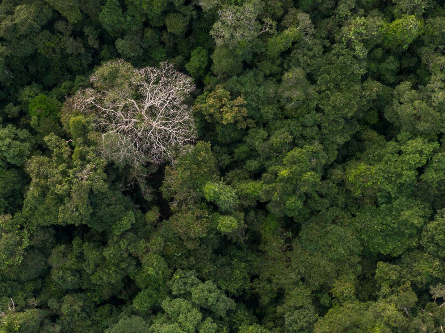 Bosques de la Amazonía - Palmari, Brasil
