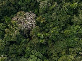 Bosques de la Amazonia - Palmari - Brasi
