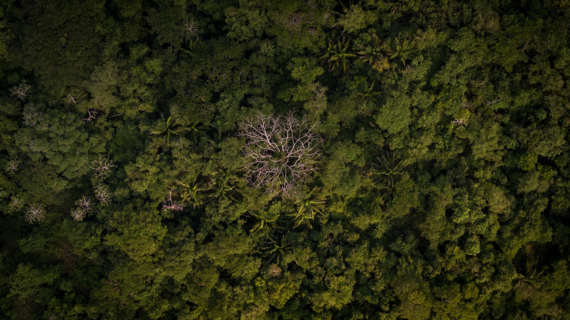 Bosque seco - Dibulla, Guajira, Colombia