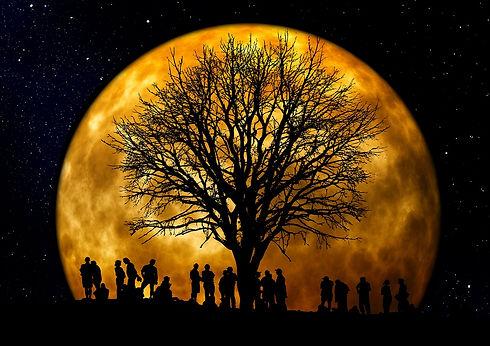 tree-66465_1280.jpg