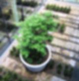 Stadtmobiliar: Großpflanztopf IFF 901