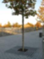 IFF 580, quadratischer Unterflurbaumrost zur Aufnahme eines Oberflächenbaumrostes: Oberflächenbaumrost ist eingebaut.