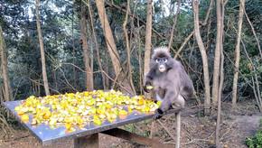 3 Santuários de animais selvagens na África do Sul que poderiam existir no Brasil