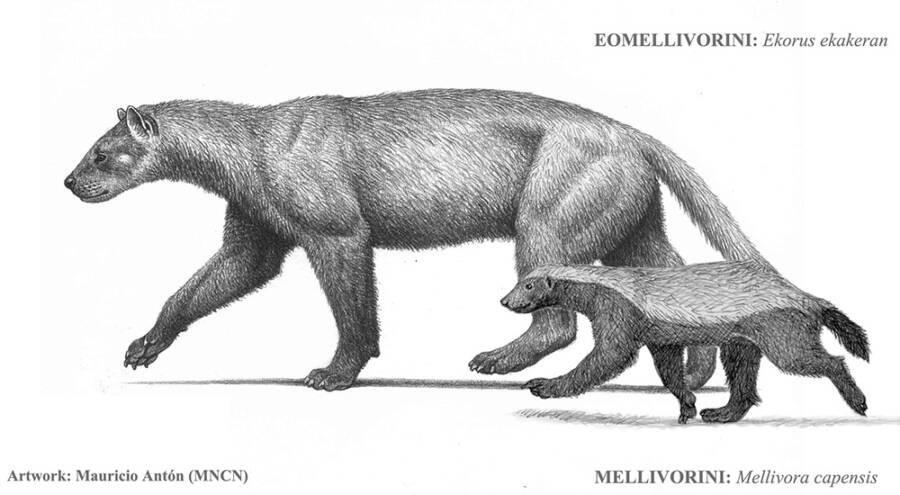 Fonte: Maurício Anton/Museu Nacional de Ciências Naturais