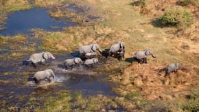 A exploração de petróleo ameaça a biodiversidade na Bacia do Okavango