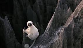 Belezas Naturais da África: Madagascar, Namíbia, Marrocos, Tanzânia e mais