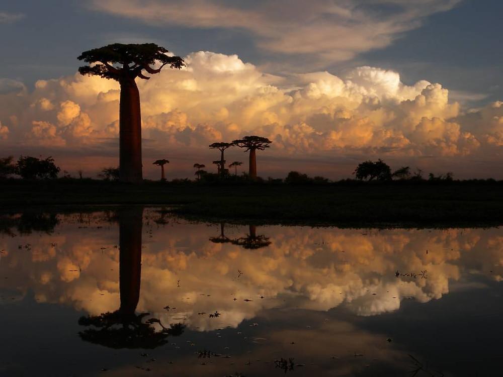Alameda dos Baobás, Madagascar