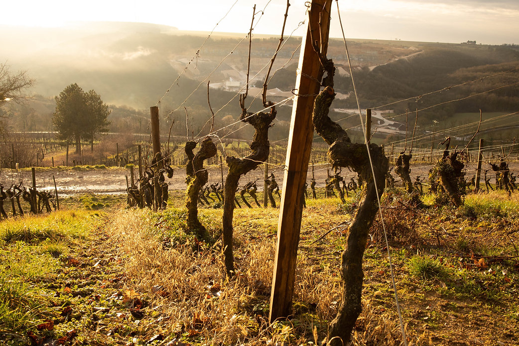 Vigne Domaine de Montmain proche de Beau