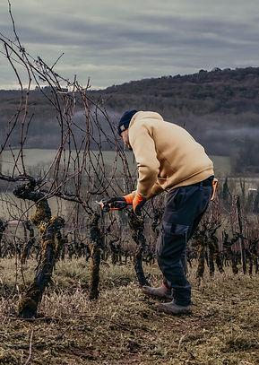 Domaine de Montmain Vigne Bourgogne Vill