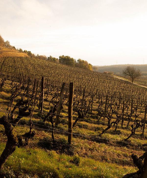 Vigne Domaine de Montmain