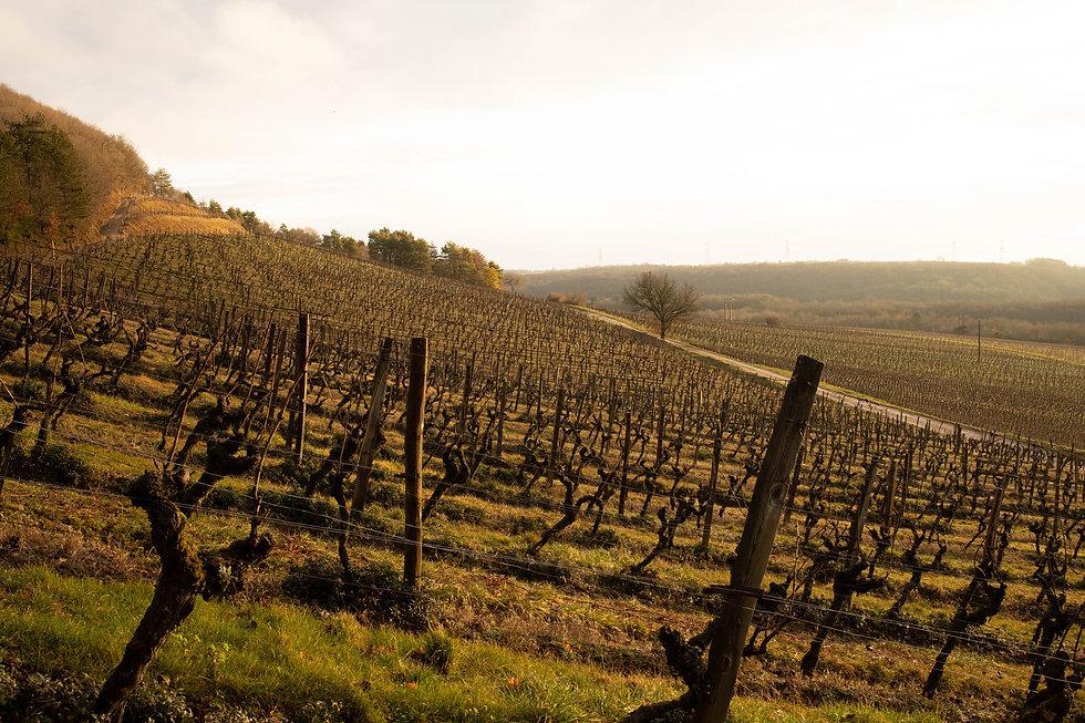 Visite des vignes du Domaine de Montmain