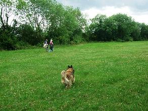 Dog Walker Bicester