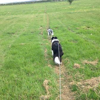 Dog Walkers Bicester