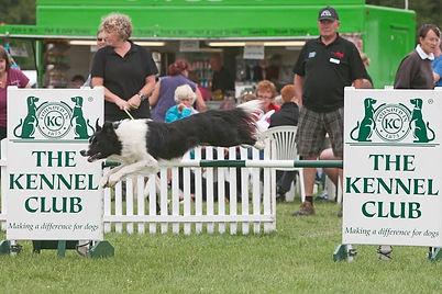 Dog Agility Classes Oxfordshire