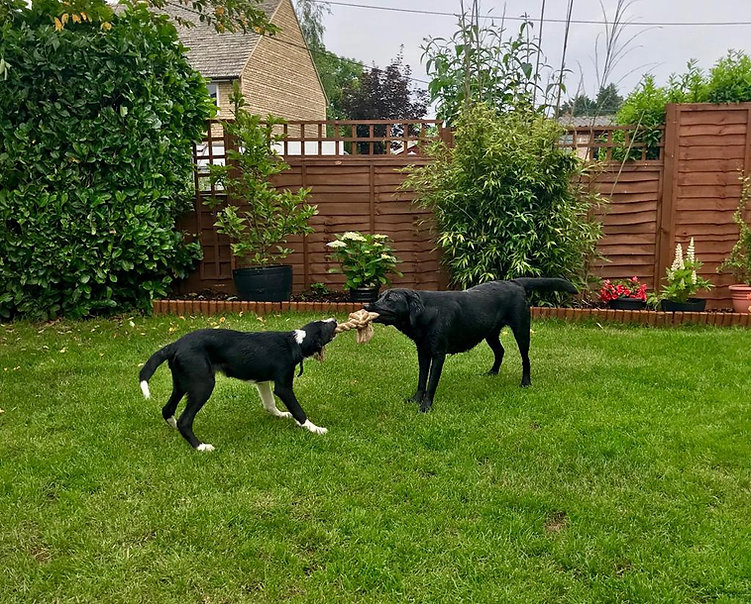 Dog Day Care Bicester