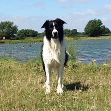 Dog Walking Oxfordshire